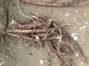 thumb1_roots2-59148